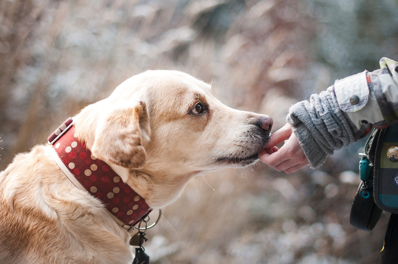 Dogs are very emotional animal when it comes to caring .