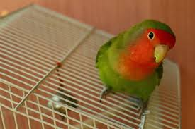 A pet bird companion for life