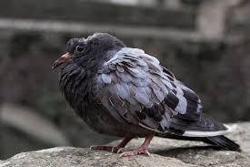 common Bird disease