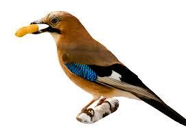 Food for a pet bird
