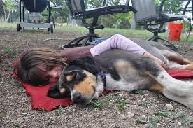 Dogs love to sleep with their owner