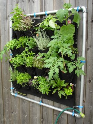 hanging herb garden on a wall